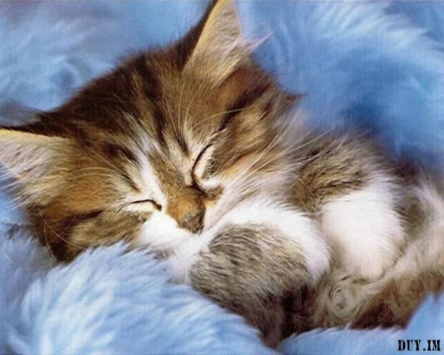 Name:  cute cats wallpaper018.jpg Views: 25 Size:  74.2 KB