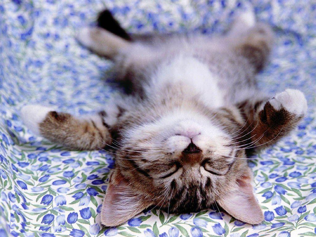 Name:  Cute-Little-Kitten-cute-kittens-16288222-1024-768.jpeg Views: 16 Size:  142.9 KB
