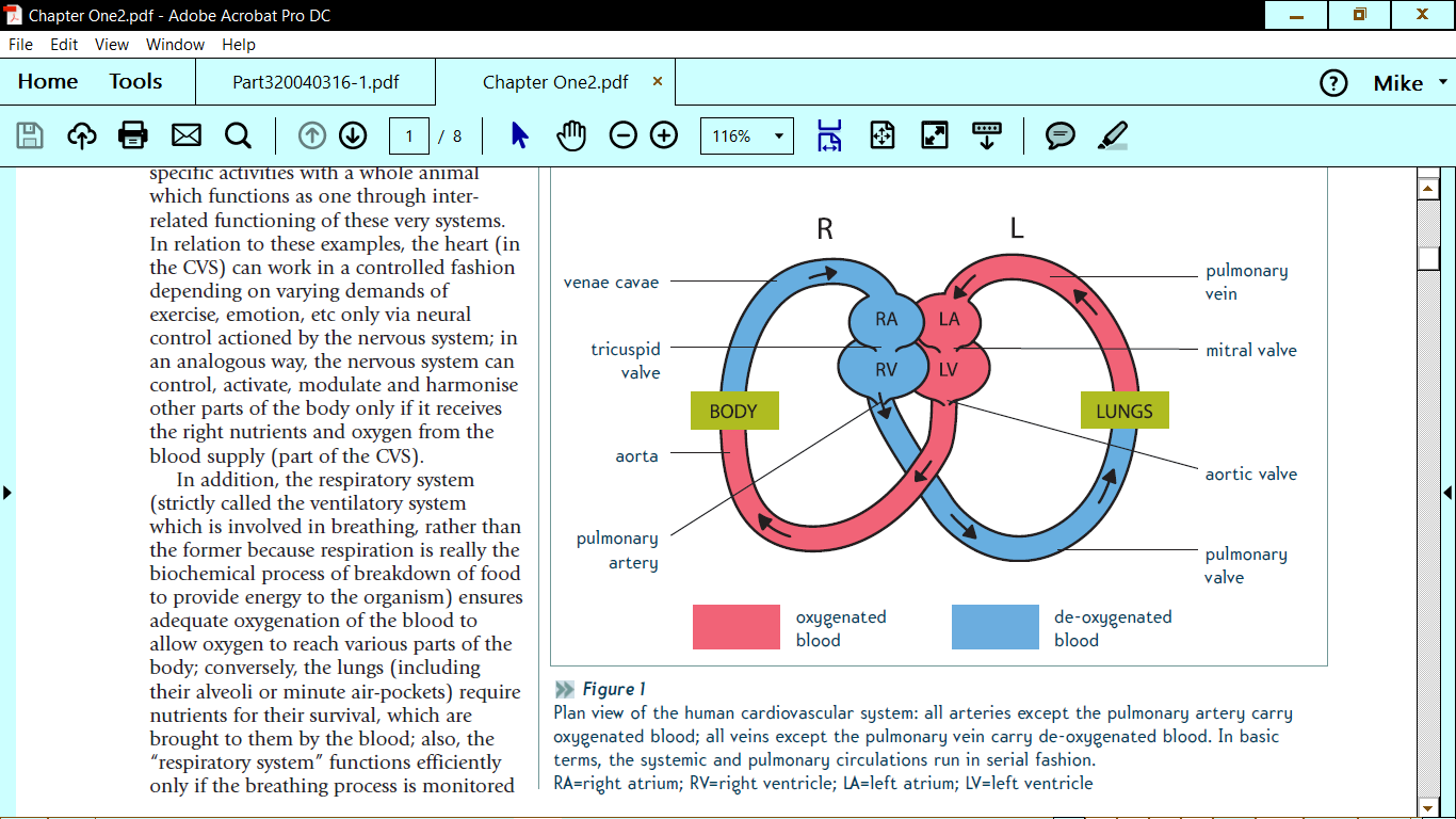 A level biology cardiac cycle the student room name cvs cycle diagramg views 330 size 1666 kb pooptronica