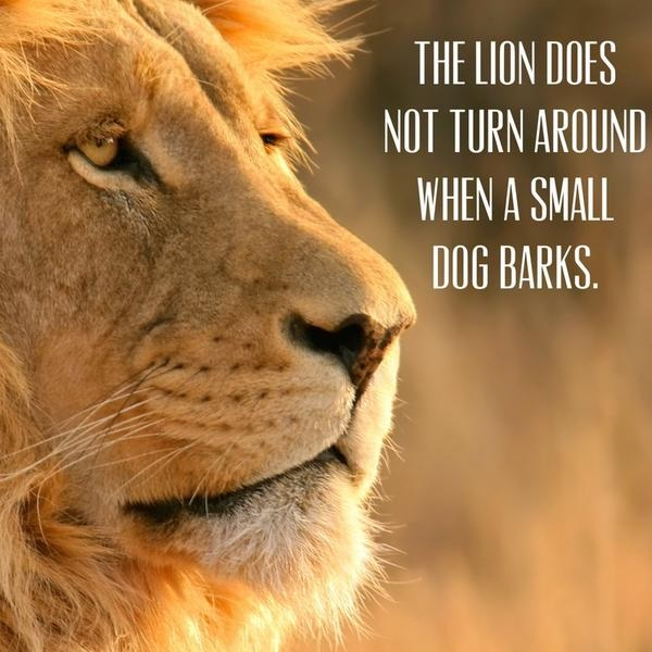 Name:  Lion doesn't turn.jpg Views: 26 Size:  100.0 KB