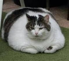 Name:  fat cat.jpg Views: 75 Size:  5.7 KB
