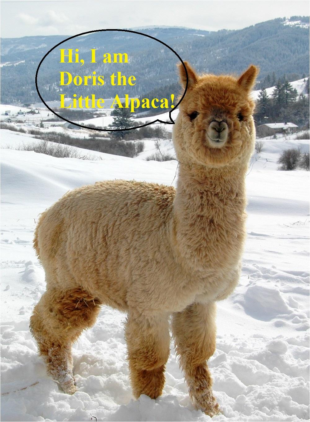 Name:  little alpaca.jpg Views: 10 Size:  494.9 KB