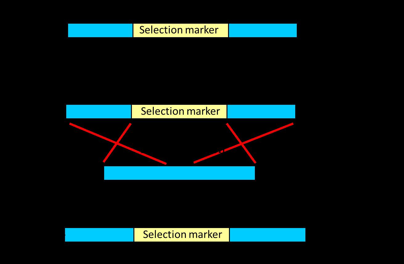 download Aktienkursreaktionen
