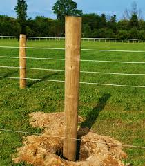 Name:  fence posts.jpg