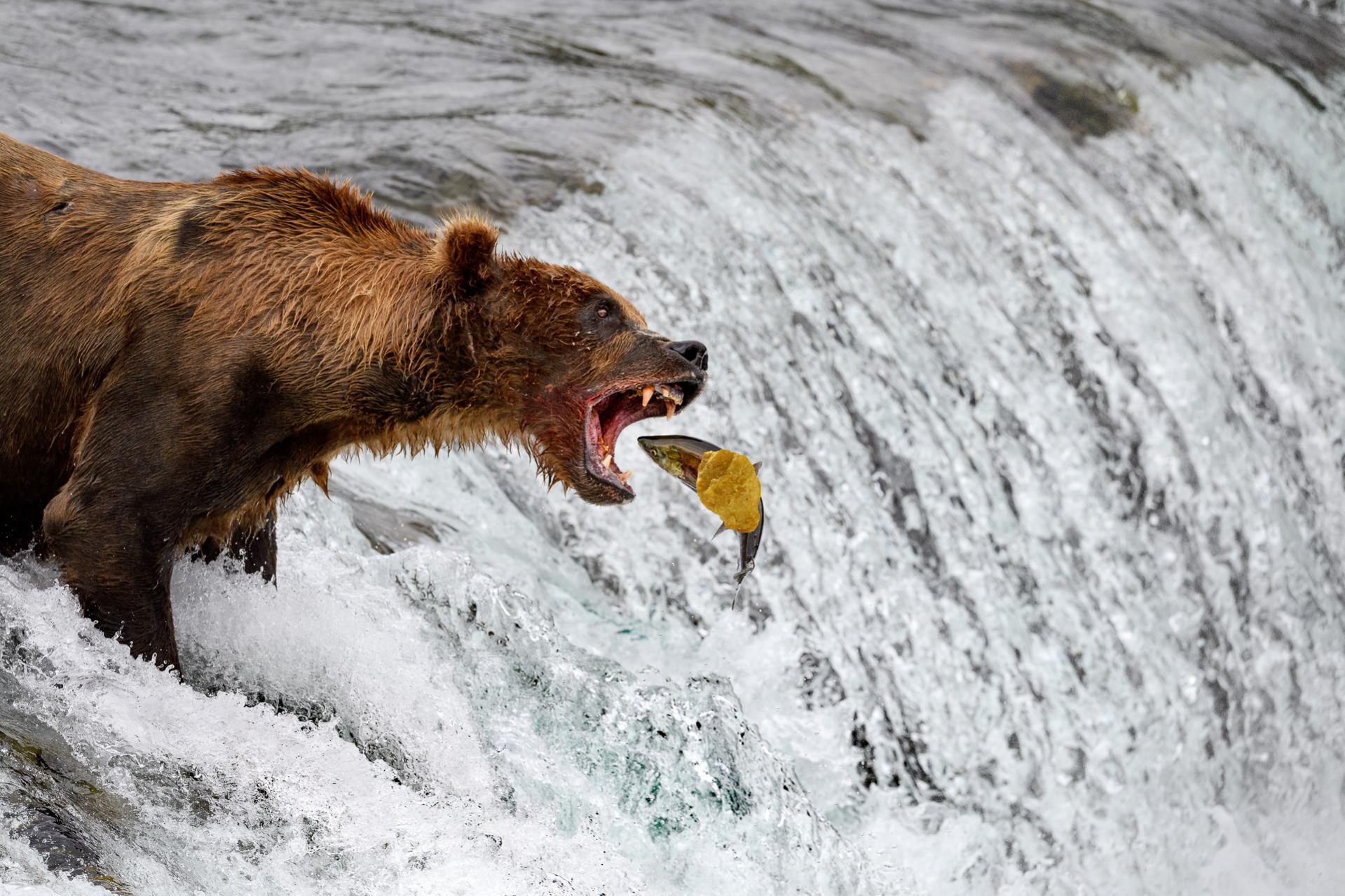 Name:  bearsalmonnugget.jpg Views: 25 Size:  342.8 KB
