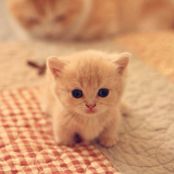 Name:  ba03237a6d6499f0e2633314826e1526--cutest-animals-baby-animals.jpg Views: 21 Size:  34.2 KB