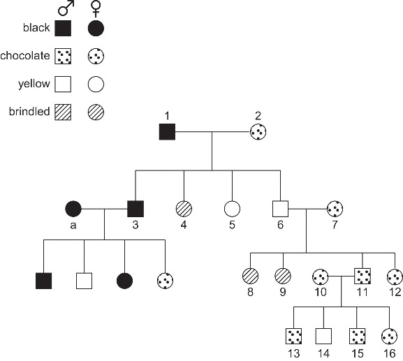 Name:  pedigree tree.jpg