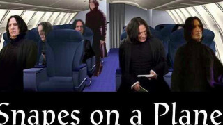 Name:  snapes on a plane.jpg Views: 12 Size:  24.0 KB
