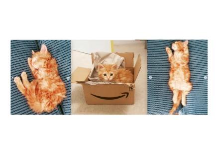 Name:  cat.jpg Views: 25 Size:  28.5 KB