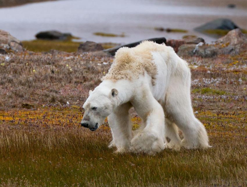 Name:  explore-through-the-lens-polar-bear-og.ngsversion.1532577681975.adapt.1900.1.jpg Views: 13 Size:  156.4 KB