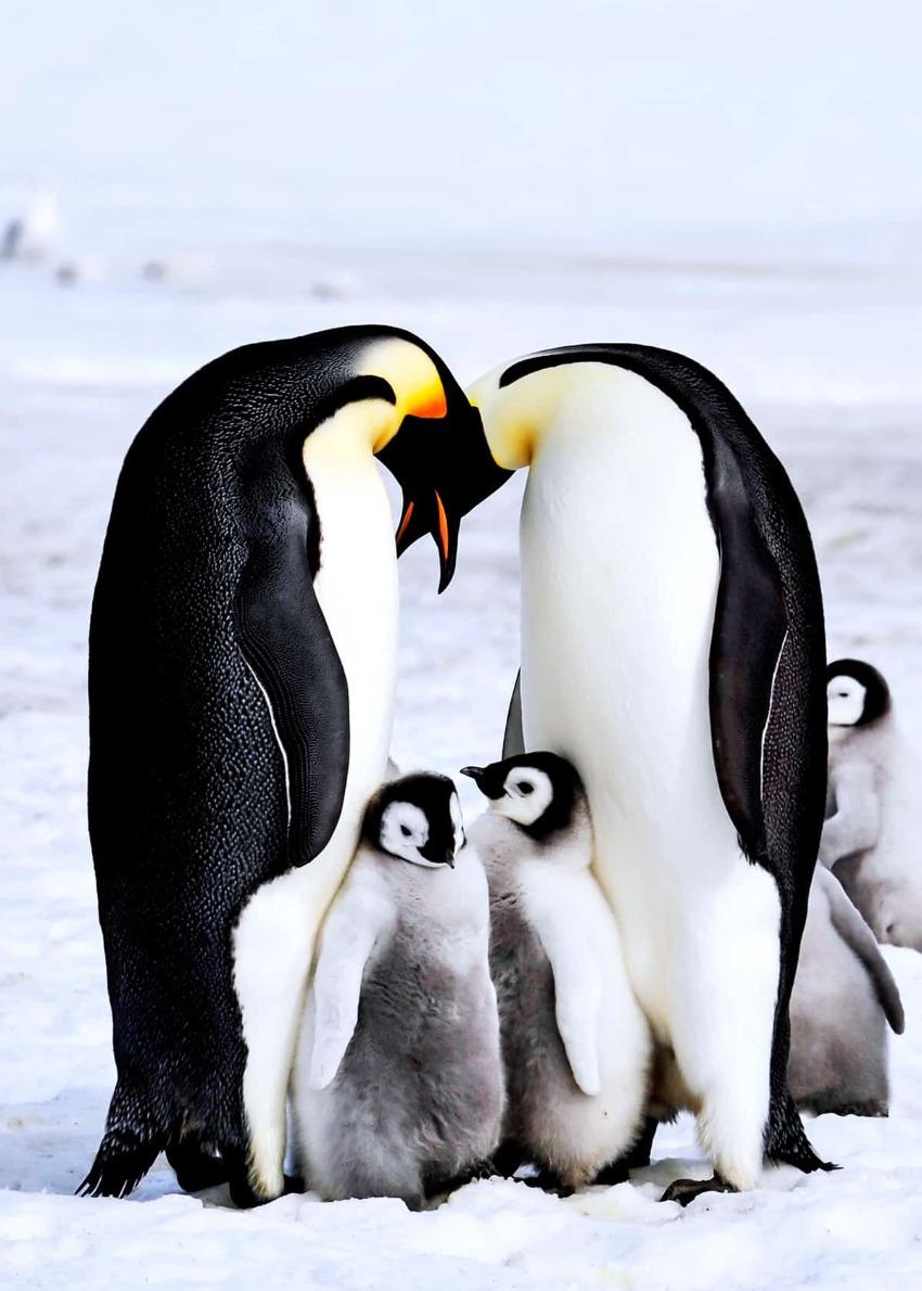 Name:  baby-emperor-penguins.jpg Views: 11 Size:  196.5 KB