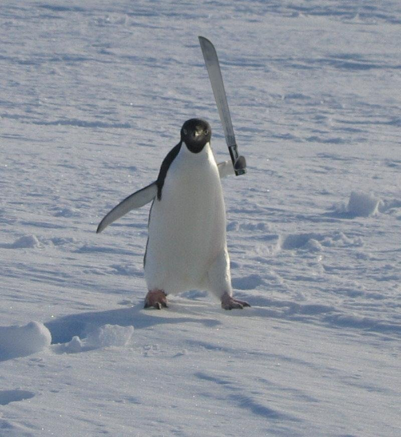 Name:  angry_penguin_by_terratus_d4u6776-fullview.jpg