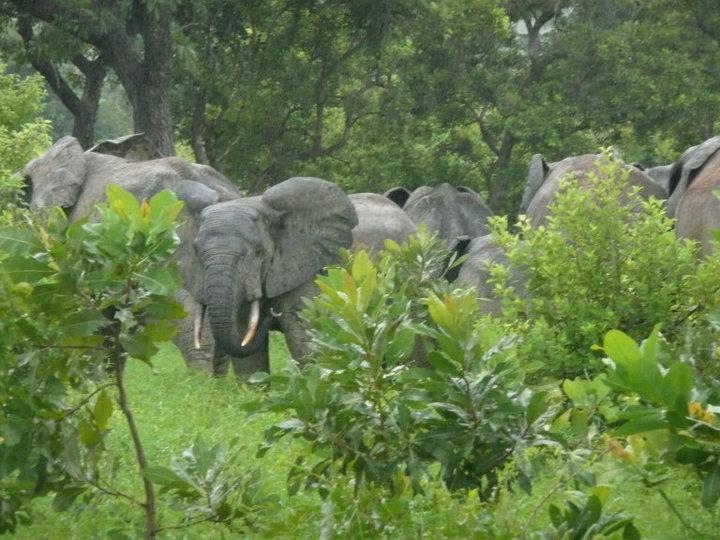 File:Ghanaelephants.jpg