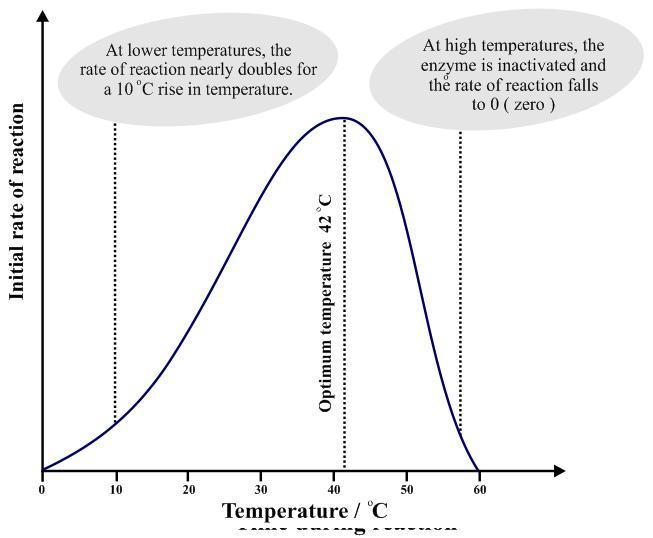 File:Temperature factor.JPG