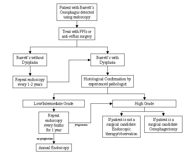 File:Barretts oesophagus surveillance.jpg