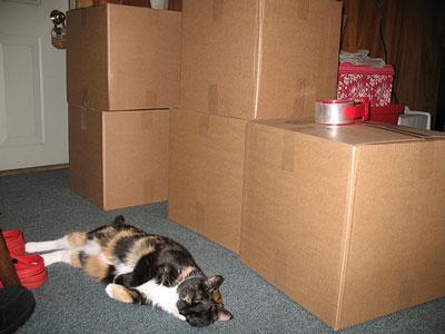 File:Catbox.jpg