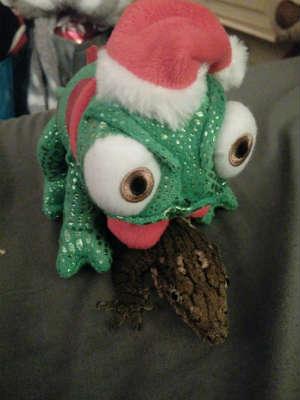 File:Christmas reptile.jpg