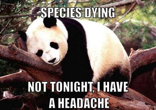 File:Panda small.jpg