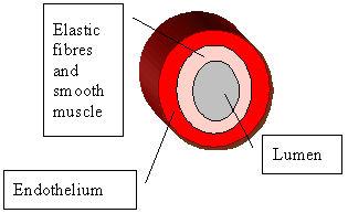 File:Artery.jpg