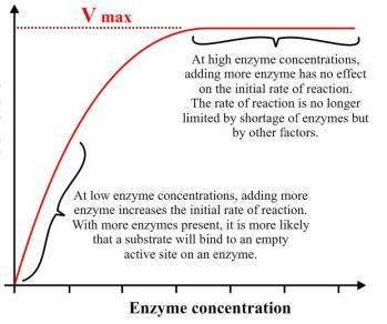 gcse coursework enzymes Free essays regarding enzymes coursework for download 26 - 48.