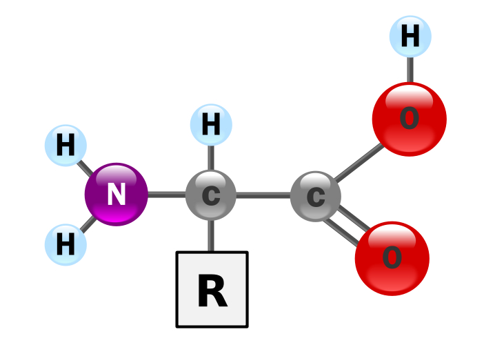 File:Amino Acid.jpg