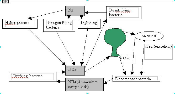 how to draw a nitrogen cycle