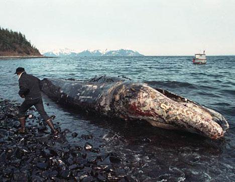 File:Exxon-valdez-oil-spill-FINCHUX4.jpg