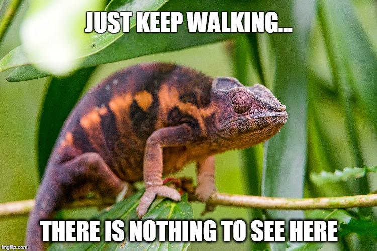 File:Chameleonmeme.jpg