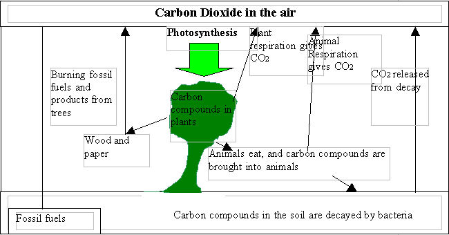 How Does Carbon Hookup Work Gcse