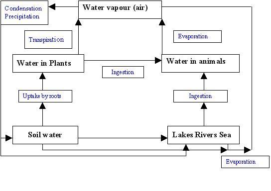 File:Water cycle.JPG
