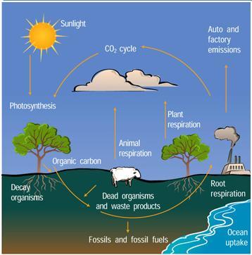 File:Carbon cycle.JPG