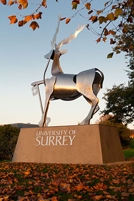 Placement years are an integral part of the University of Surrey's undergraduate degrees