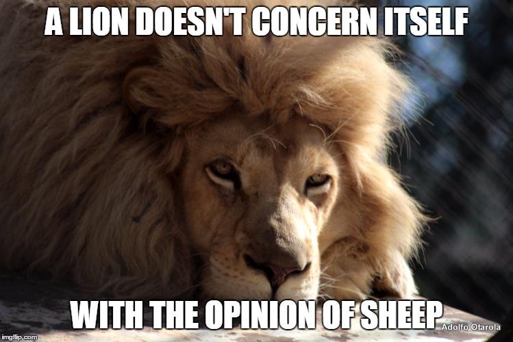 File:Lionandsheep.jpg