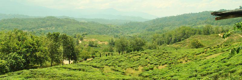 File:Sabah Tea Gardens2.jpg