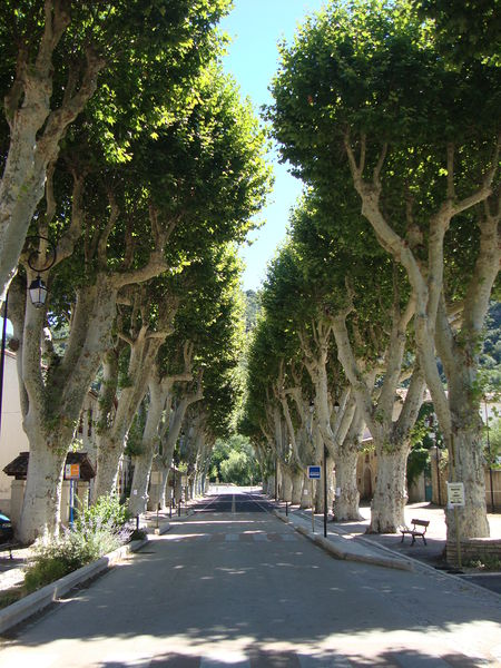 File:Avenue.JPG