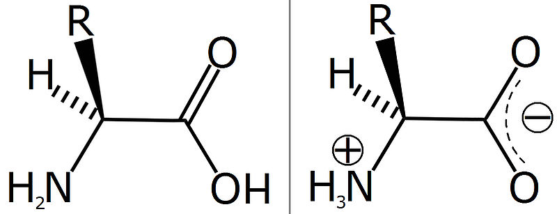 File:Unionised Amino Acid and Zwitterion.jpg